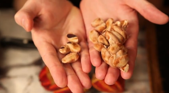 Raw Cacao Seeds
