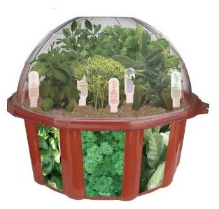 Herb Terrarium