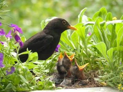mommabird