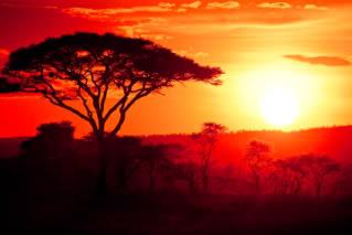 African Savannah