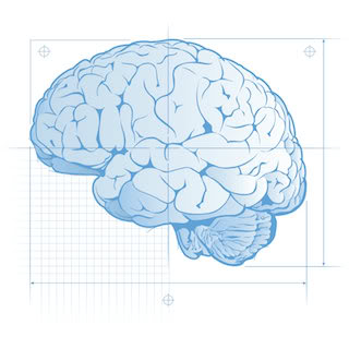 Brain Blueprint