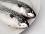 The Simple Beauty of the Mackerel
