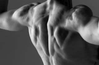 Muscular Shoulders