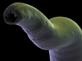 Can Helminthic Worm Therapy Beat Asthma and Allergies?
